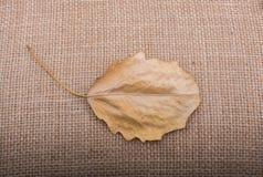 Uma folha seca separada na vista fotografia de stock