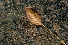 Uma folha seca separada na vista fotos de stock