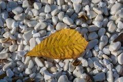 Uma folha seca separada na vista fotografia de stock royalty free