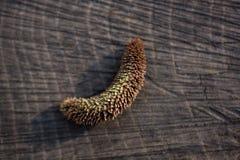 Uma folha seca separada na vista imagem de stock royalty free