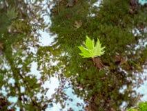 Uma folha verde flutua em um córrego pequeno imagens de stock