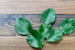 Uma folha verde fresca do cal do kaffir no fundo de madeira da tabela Foto de Stock
