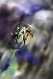 Uma formiga Foto de Stock