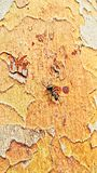 uma formiga preta na casca de árvore do golem imagem de stock
