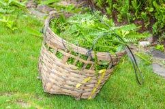 Uma foto bonita da cesta de madeira com as folhas no jardim Imagens de Stock