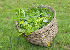 Uma foto bonita da cesta de madeira com as folhas no jardim Imagens de Stock Royalty Free