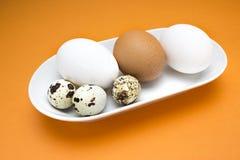 Uma foto de ovos brancos e bege crus das codorniz, da galinha e da galinha na placa branca da porcelana na tabela alaranjada Uma  Foto de Stock Royalty Free