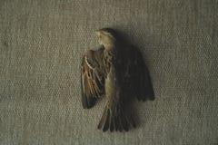 Uma foto de um pardal inoperante foto de stock royalty free