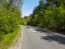 Uma fotografia da estrada reparada na floresta imagens de stock royalty free