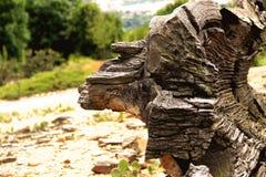 Uma fotografia de um tronco de árvore Fotografia de Stock Royalty Free