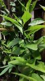 uma fotografia do borrão da árvore imagens de stock