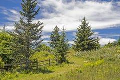 Uma fuga entre Blackberry arbustos em Grayson Highlands imagem de stock royalty free