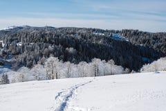 Uma fuga na inclinação nevado na parte superior da montanha com os pinhos no fundo fotografia de stock royalty free