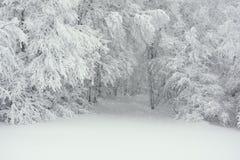 Uma fuga nevado na floresta Foto de Stock