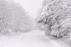 Uma fuga nevado na floresta Imagem de Stock