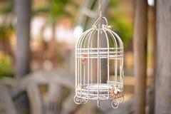 Uma gaiola de pássaro antiquado Fotografia de Stock