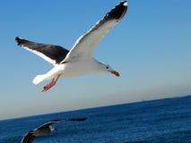 Uma gaivota 4 Imagens de Stock Royalty Free