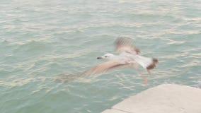 Uma gaivota anda em uma telha no concreto e decola video estoque