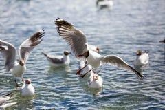 Uma gaivota com um desejo forte executar foto de stock
