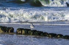 Uma gaivota de mar está esperando o alimento Imagem de Stock