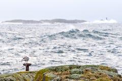 Uma gaivota de mar que está calmamente em um polo em uma ilha pequena imagens de stock royalty free