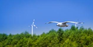 Uma gaivota do voo paira sobre o mar próximo pela floresta dos manguezais e pela linha de turbinas eólicas Imagens de Stock