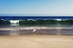 Uma gaivota do voo sobre as ondas no oceano em Malibu, Los Angeles, EUA NO VERÃO Foto de Stock Royalty Free