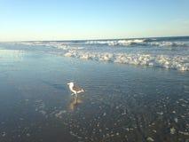 Uma gaivota na praia de Lido, Long Island Foto de Stock