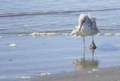 Uma gaivota na ressaca Fotografia de Stock Royalty Free