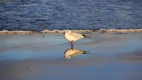 Uma gaivota no beira-mar Liberdade da felicidade e forma facil de vida Imagens de Stock