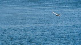 Uma gaivota no céu azul está olhando para fora para a rapina fotografia de stock royalty free