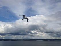 Uma gaivota perto do Foto de Stock