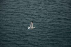 Uma gaivota que explora o oceano Imagem de Stock