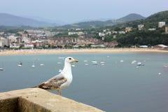 Uma gaivota que olha através da água imagens de stock