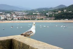 Uma gaivota que olha em linha reta na câmera com uma praia bonita no fundo fotografia de stock