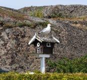 Uma gaivota que senta-se sobre uma casa do pássaro foto de stock royalty free