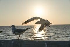 Uma gaivota que toma o voo e que gira para o por do sol foto de stock