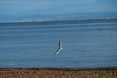 Uma gaivota que voa sobre a vista Foto de Stock Royalty Free