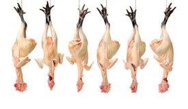Uma galinha preta crua dos pés pronta para cozinhar imagem de stock royalty free