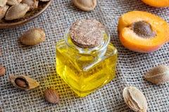 Uma garrafa do óleo de núcleo do abricó com abricós frescos fotografia de stock