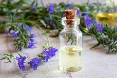 Uma garrafa do óleo essencial do hyssop com o hyssop de florescência fresco fotos de stock royalty free