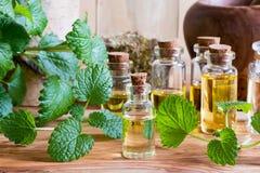 Uma garrafa do óleo essencial do melissa com os galhos frescos do melissa fotografia de stock royalty free
