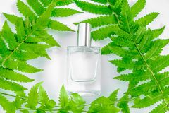 Uma garrafa do perfume e das flores brancos com folhas imagens de stock