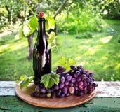 Uma garrafa do vinho, da videira e do grupo de uvas em um fundo do th Fotografia de Stock