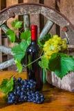 Uma garrafa do vinho no fundo da videira Fotos de Stock