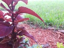 Uma gota da água na planta imagem de stock royalty free