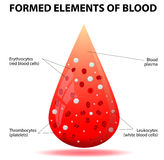 Uma gota de sangue Foto de Stock Royalty Free