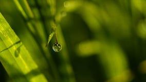 Uma gota do orvalho da manhã Imagem de Stock