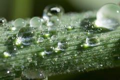 Uma gota, sumário, fundo, brilhante, limpo, cor, orvalho, gota, fresco, verde, folha, vida, luz, macro, natural, natureza, chuva Fotos de Stock