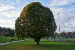 Uma grande árvore simétrica solitária fotografia de stock